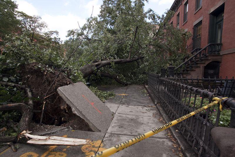 Treedownmichelle
